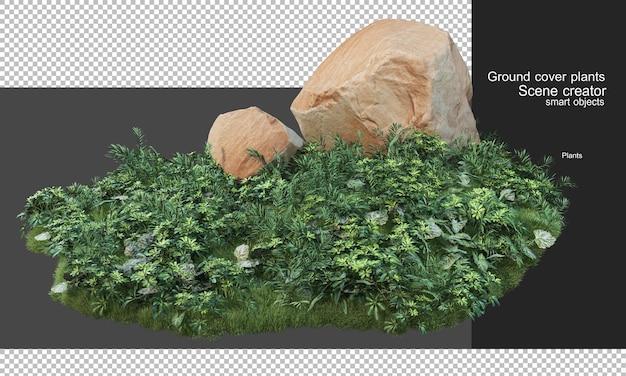 3d-рендеринг покровных растений и крупных камней