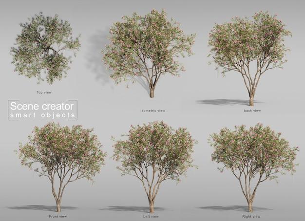 사막 버드 나무 장면 제작자의 3d 렌더링
