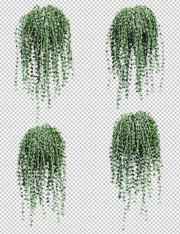 ディスキディア吊り植物の3 dレンダリング