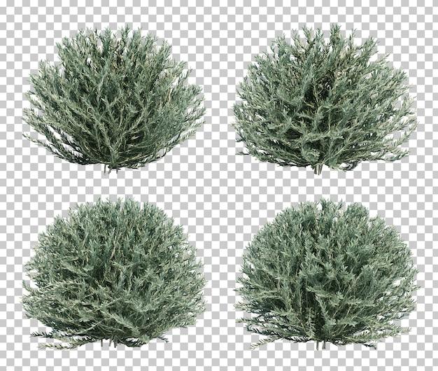 ドワーフオリーブの茂みの3 dレンダリング