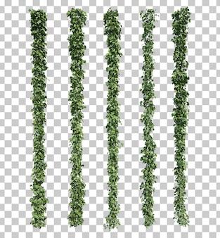 3d-рендеринг epipremnum aureum