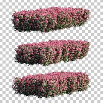 3d-рендеринг молочай мили кустарников