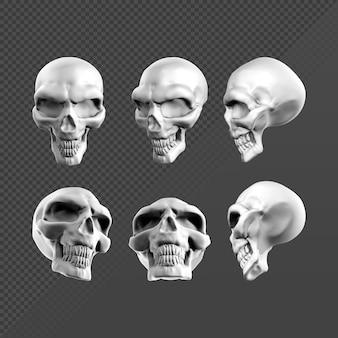 さまざまな視点からのファンタジー頭蓋骨スケルトンヘッドの3dレンダリング