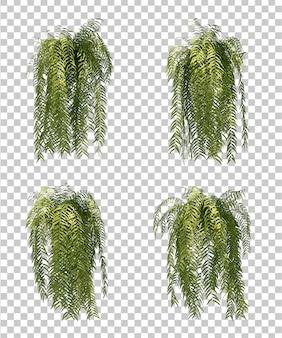 シダの木の3 dレンダリング