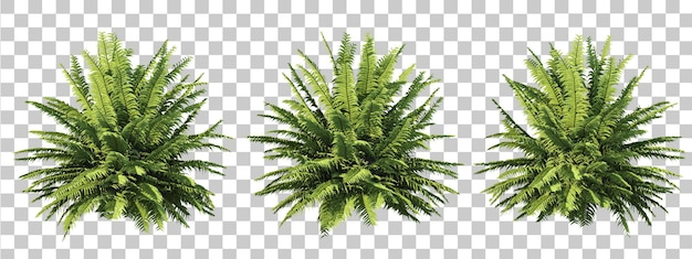 シダの木の孤立したコレクションの3dレンダリング Premium Psd