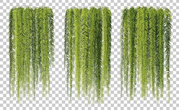3d-рендеринг изолированных набор висячих папоротников