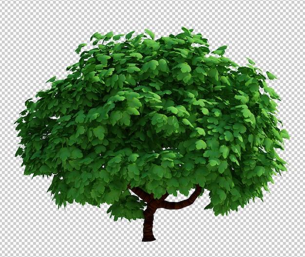 孤立した木の3 dレンダリング
