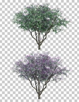 ジャカランダミモシフォリアの木の3dレンダリング