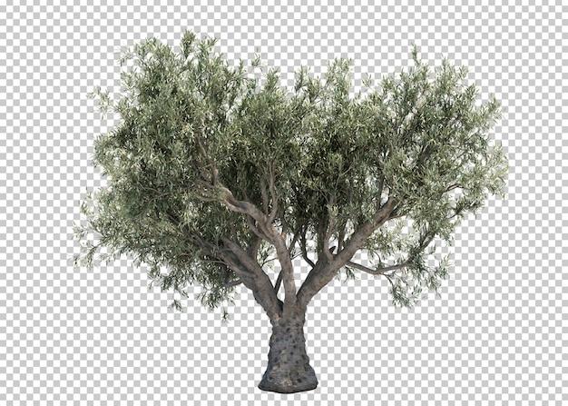 3d-рендеринг оливкового дерева