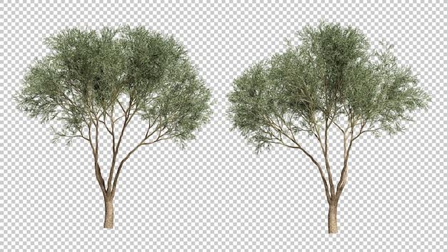 オリーブの木の3 dレンダリング
