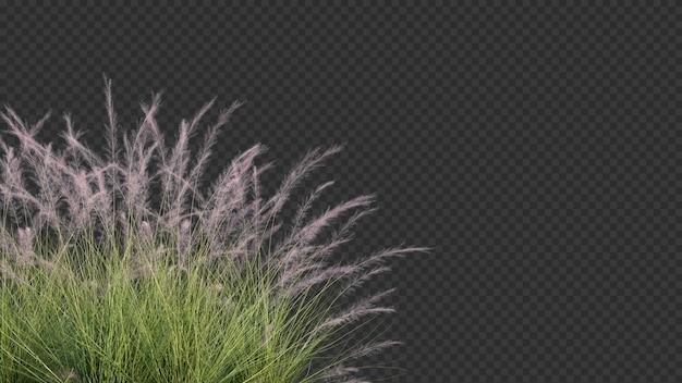 ピンクのフラミンゴmuhly草前景の3 dレンダリング