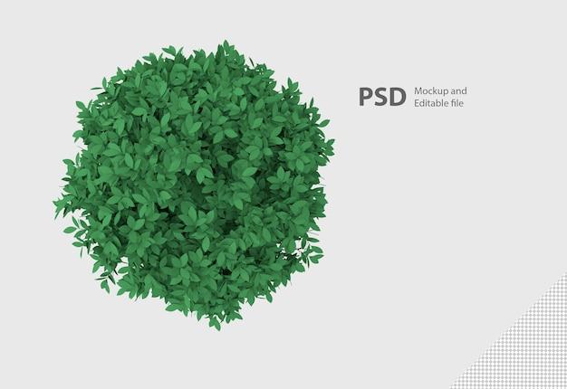 分離された鉢植えの植物の3dレンダリング