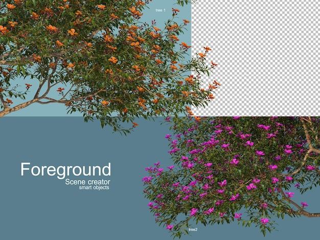 孤立した樹木の3dレンダリング