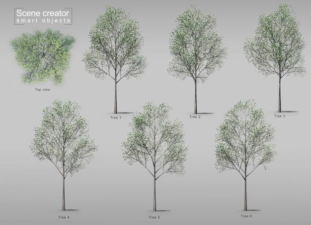 木の3 dレンダリング