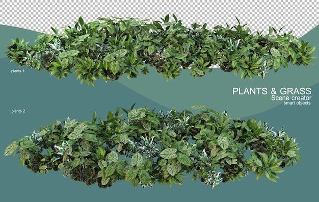 さまざまな植物配置の3dレンダリング