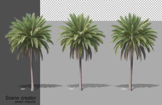 分離されたさまざまな樹木タイプの3dレンダリング