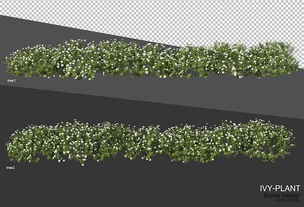 다양한 유형의 아이비 디자인의 3d 렌더링