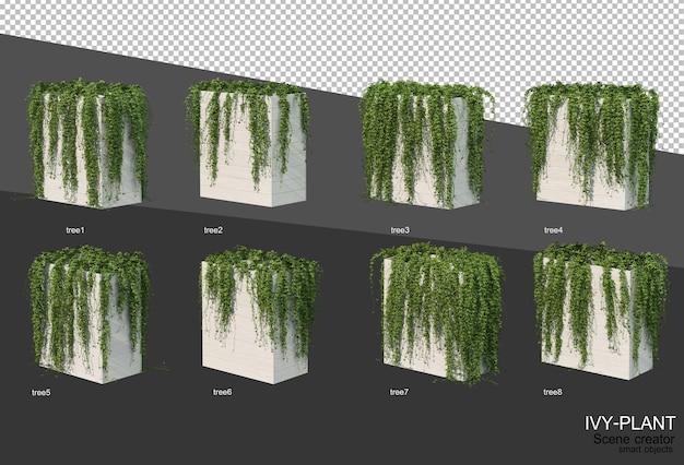 さまざまな種類のツタのデザインの3dレンダリング