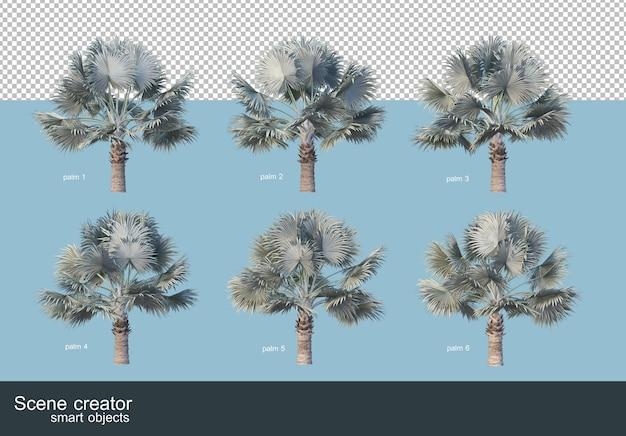 3d-рендеринг различных видов пальм