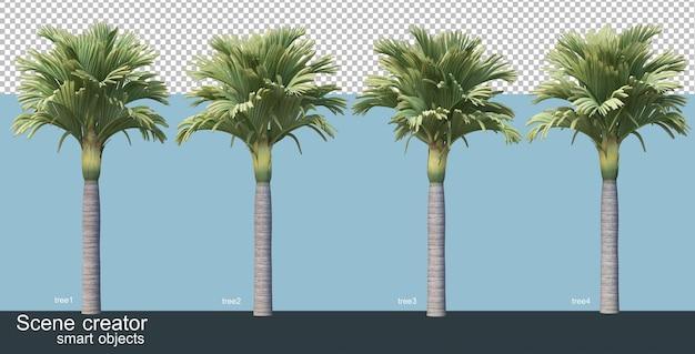 3d рендеринг различных видов пальм
