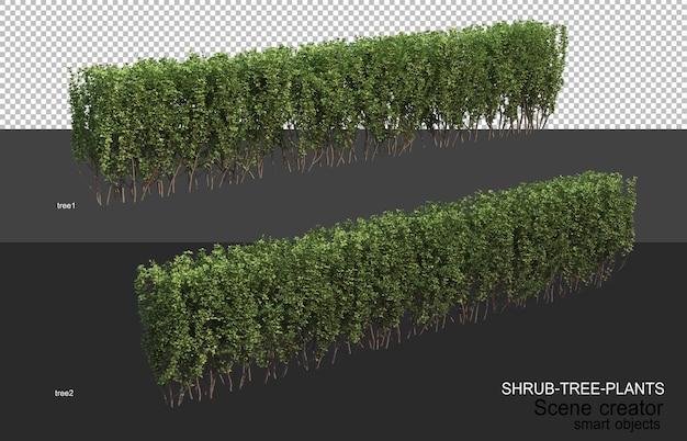 さまざまな種類の灌木レイアウトの3dレンダリング