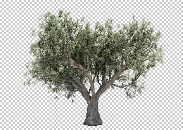 3d rendering of olive tree