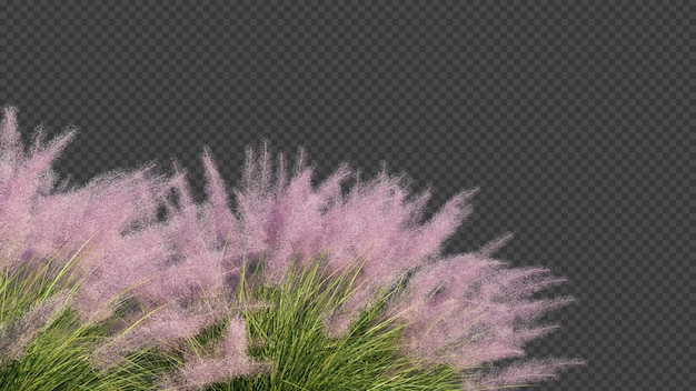 3d rendering of pink flamingo muhly grass foreground