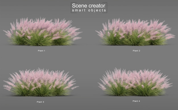 3d rendering of pink flamingo muhly grass