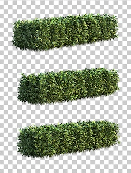 3d rendering of pseuderanthemum atropurpureum