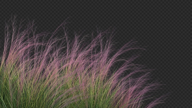 3d rendering of purple three awn grass foreground