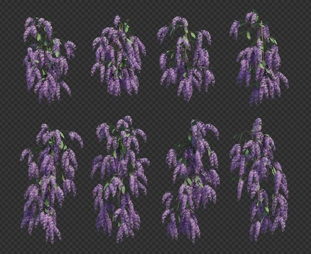 3d rendering of queen's wreath tree collection