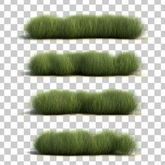 3d rendering of sedge grass