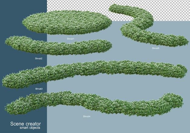 3d rendering of shrubs arrangement isolated