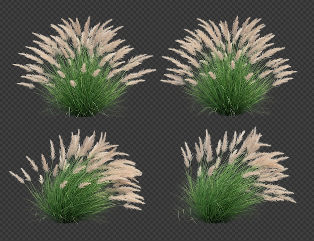 3d rendering of silver spike grass