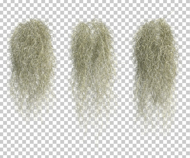 3d rendering of spanish moss