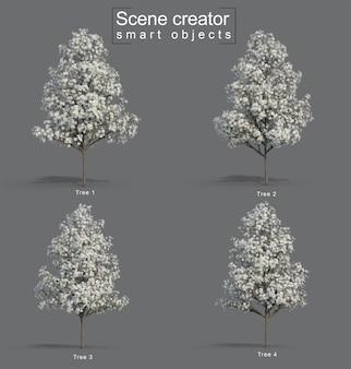 3d rendering of star magnolia
