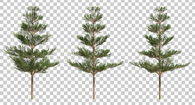 3d rendering of terminalia ivorensis trees