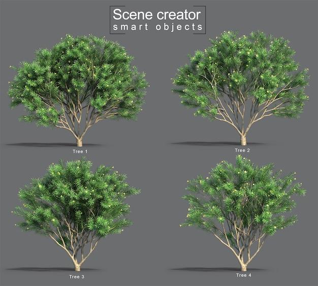 3d rendering of thevetia peruviana tree scene creator