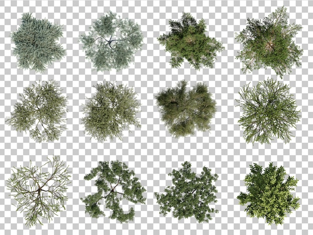 3d rendering of trees top view