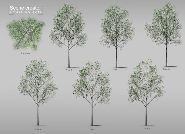 3d rendering of trees