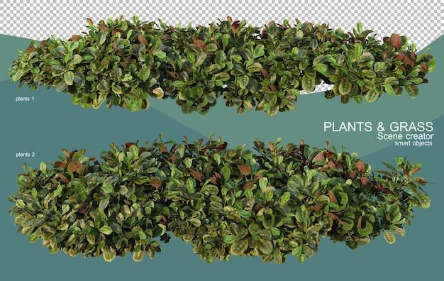 3d rendering of various plant arrangements