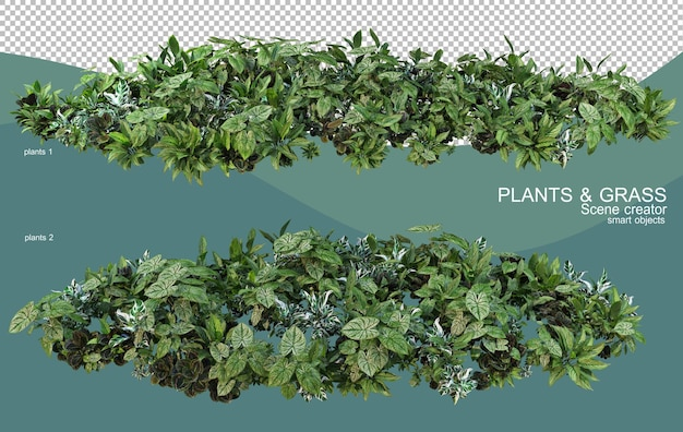 3d rendering of various plant arrangements