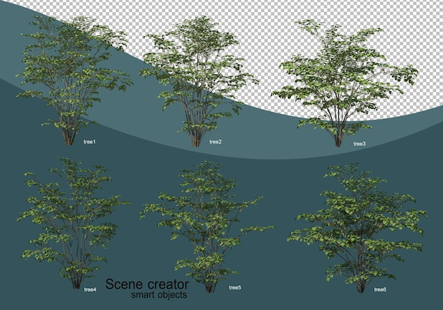 3d rendering of various tree design