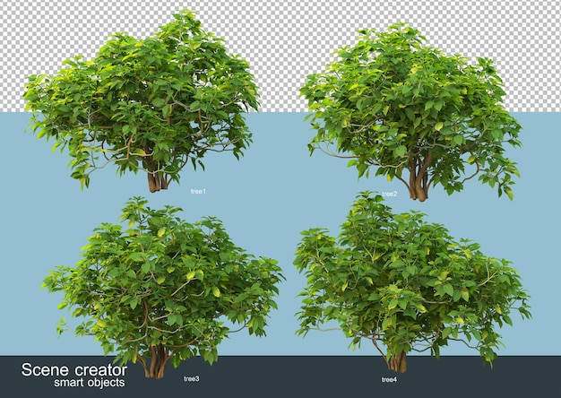 3d rendering of various tree shapes and types