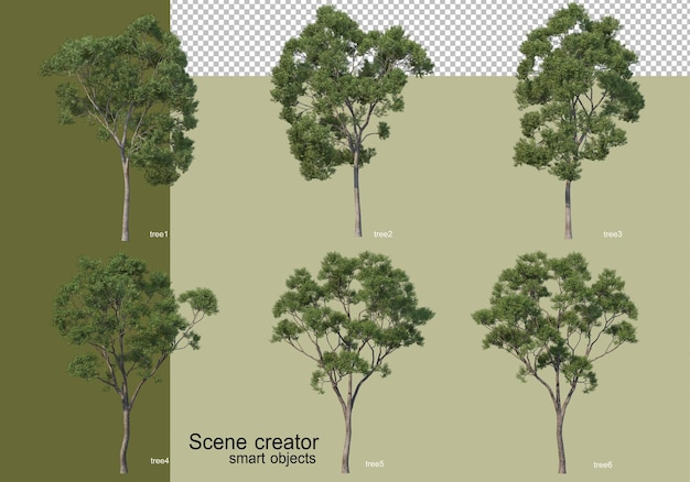 3d rendering of various trees isolated