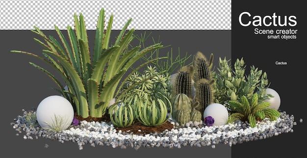 3d rendering various types of cactus arrangements