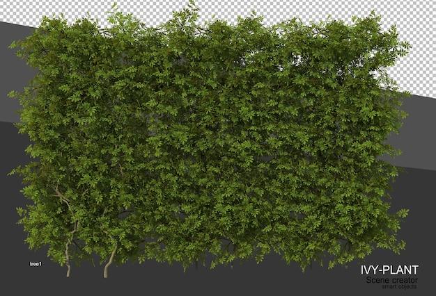 3d rendering of various types of ivy design