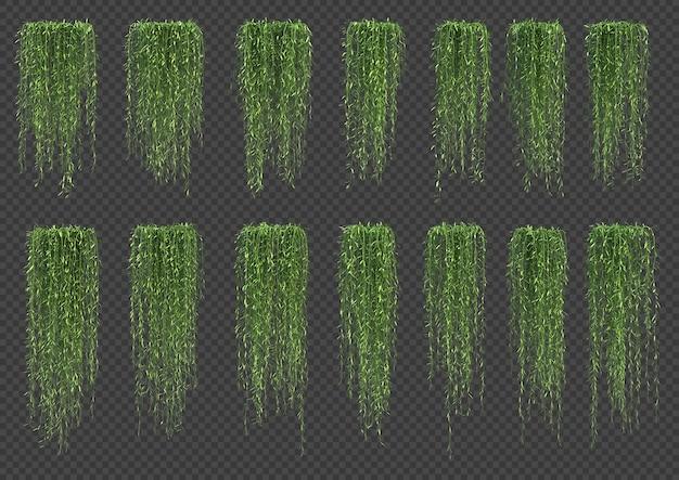 3d rendering of vernonia elliptica tree in 3d rendering