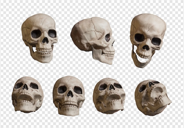 現実的な頭蓋骨のコレクション