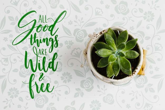 トップビューのエレガントな植物の概念